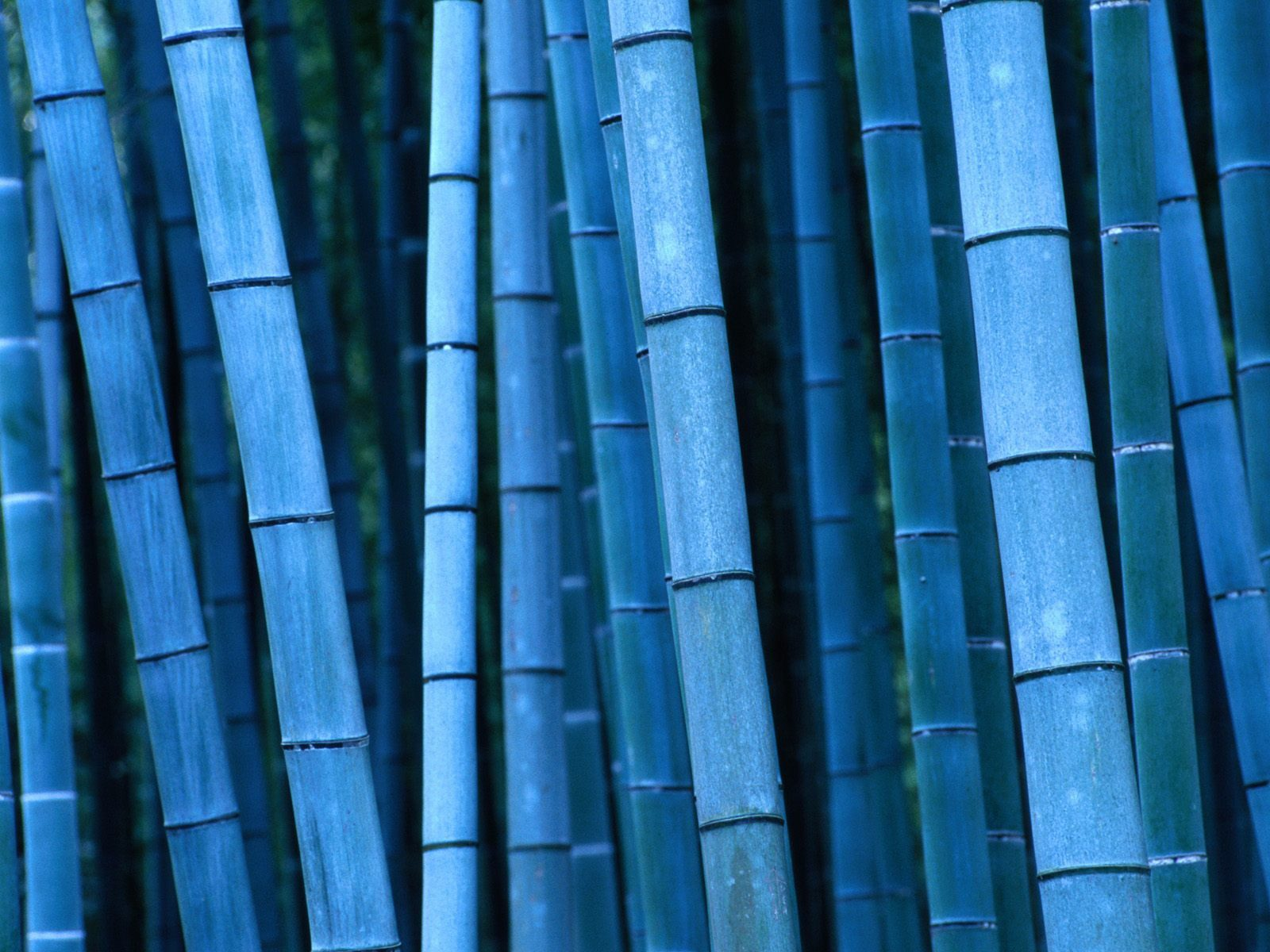 Bamboo Blue Presentation Template for Keynote